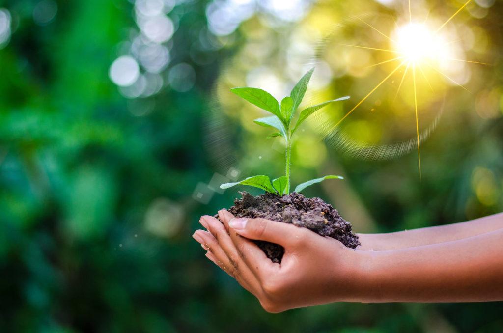Nachhaltigkeit und Gesundheit